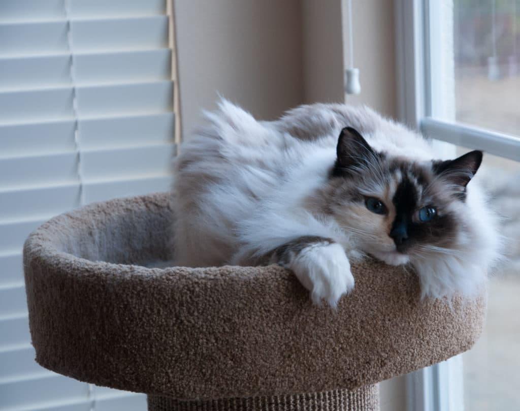 Sasha relaxing