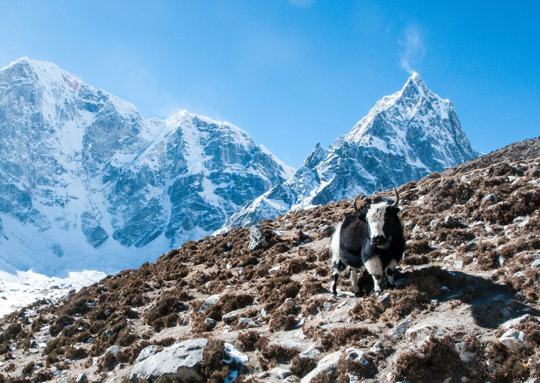 Of Yak and Mountains, part two