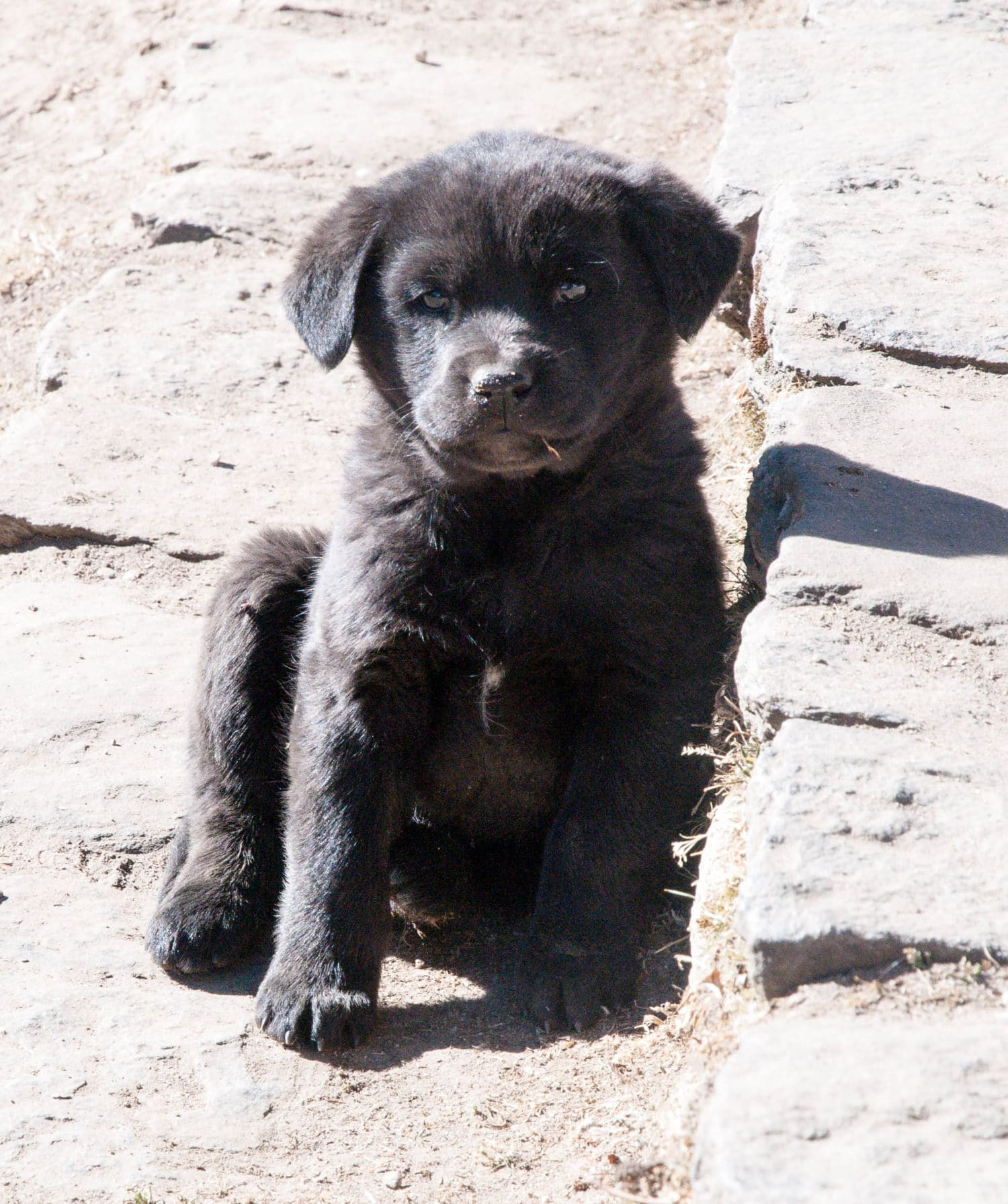Monastery Puppy