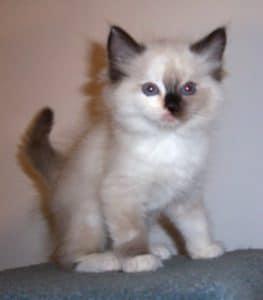 sasha kitten picture