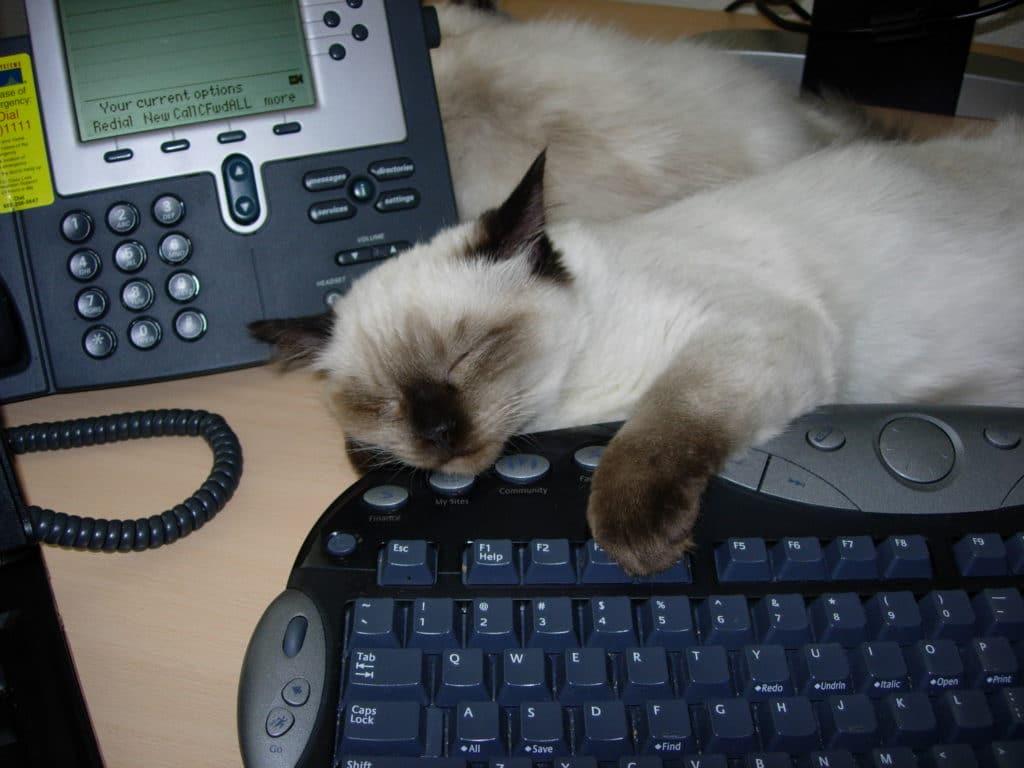 Snowball kitten sleeping