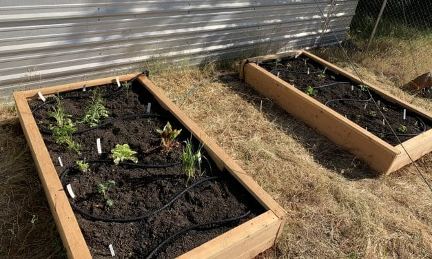 DIY Project: Raised Beds for Home Garden